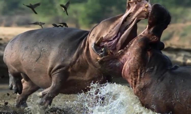 Le meilleur documentaire animalier, mieux qu'un safari?