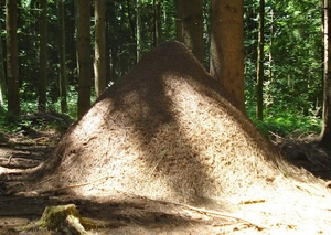la fourmilière