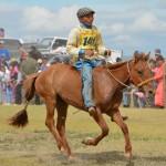 course chevaux mongolie