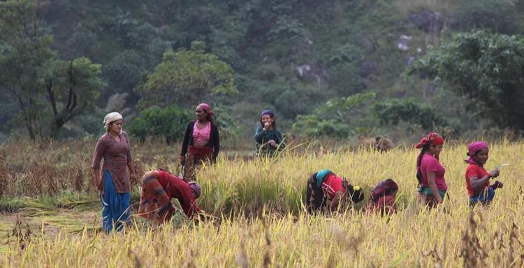 riziere village annapurna