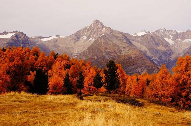 Poèmes sur la nature et l'environnement