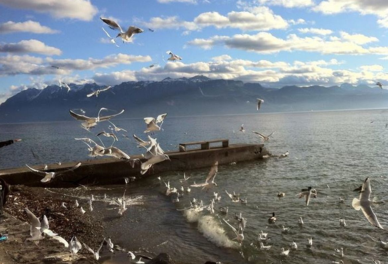 lac leman suisse